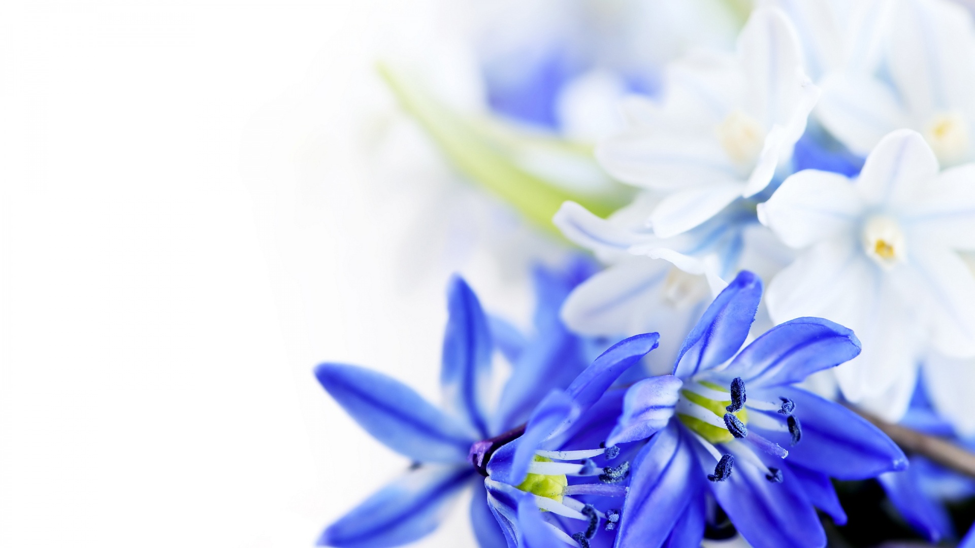 blue flowers 119 cool wallpaper - hdflowerwallpaper