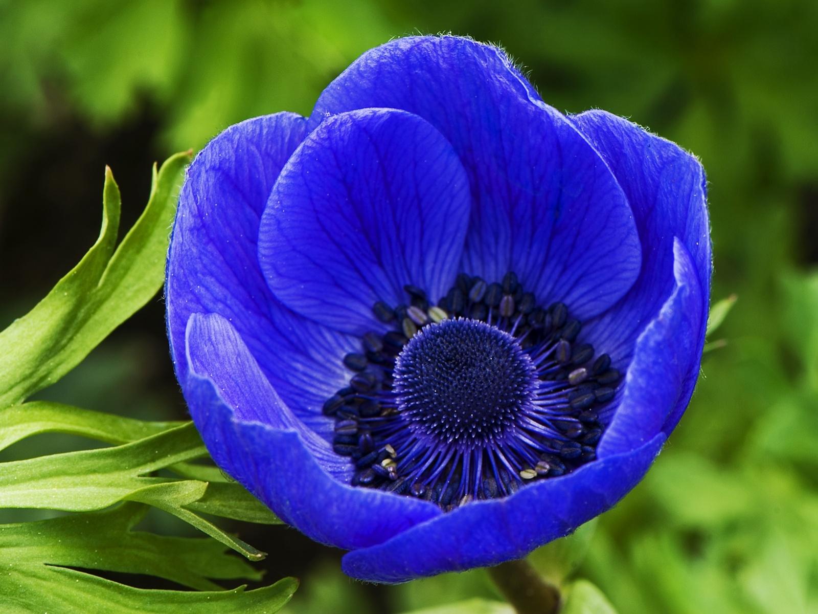Blue flowers 70 hd wallpaper hdflowerwallpaper blue flowers widescreen wallpaper izmirmasajfo