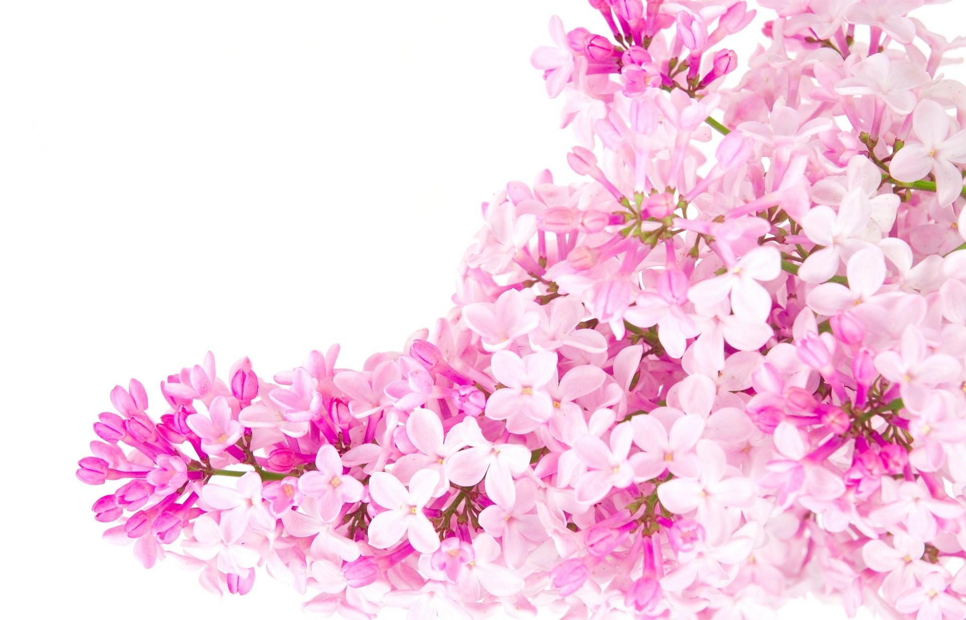 Pink flowers 162 free wallpaper hdflowerwallpaper pink flowers hd wallpaper mightylinksfo