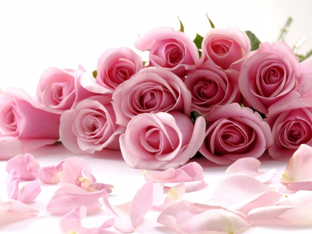 Pink flowers meaning 28 free hd wallpaper hdflowerwallpaper pink flowers meaning free wallpaper mightylinksfo