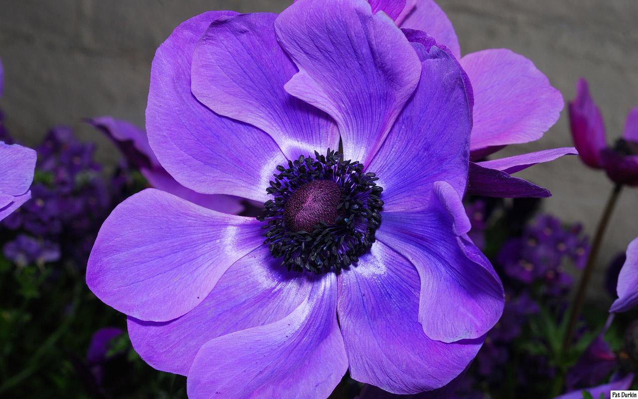Purple flowers list 22 free wallpaper hdflowerwallpaper purple flowers list wide wallpaper mightylinksfo