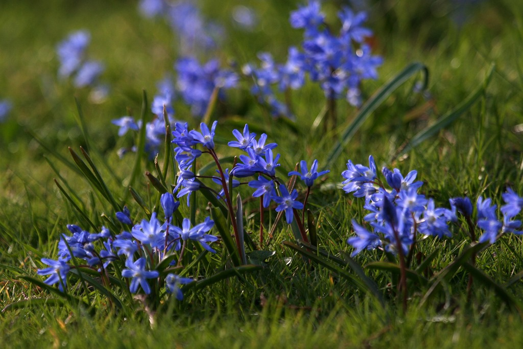 Blue Flowers Names 104 Free Hd Wallpaper