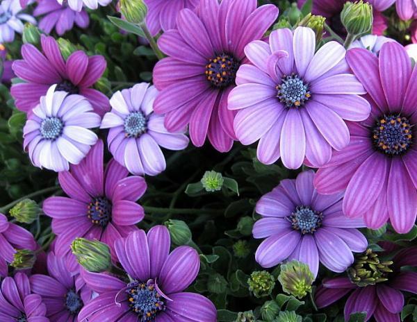 Lovely Lady Purple Flowers Wide Wallpaper