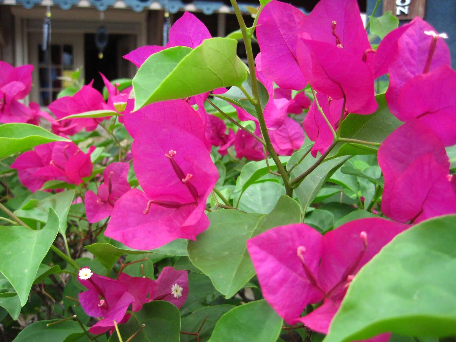 Pink Flowers By Name 7 Hd Wallpaper Hdflowerwallpaper