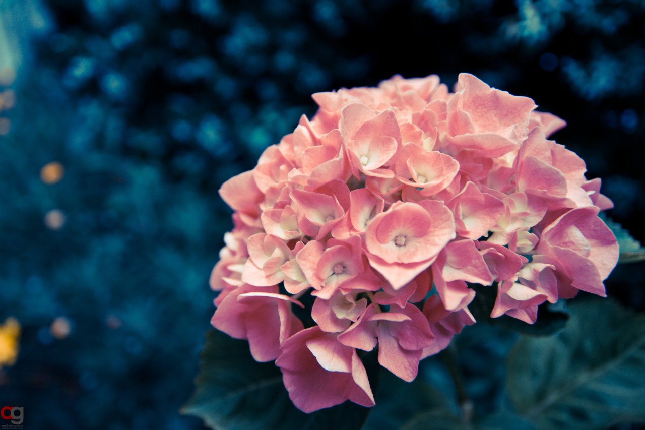 Pink flowers tumblr 15 widescreen wallpaper hdflowerwallpaper pink flowers tumblr free wallpaper mightylinksfo