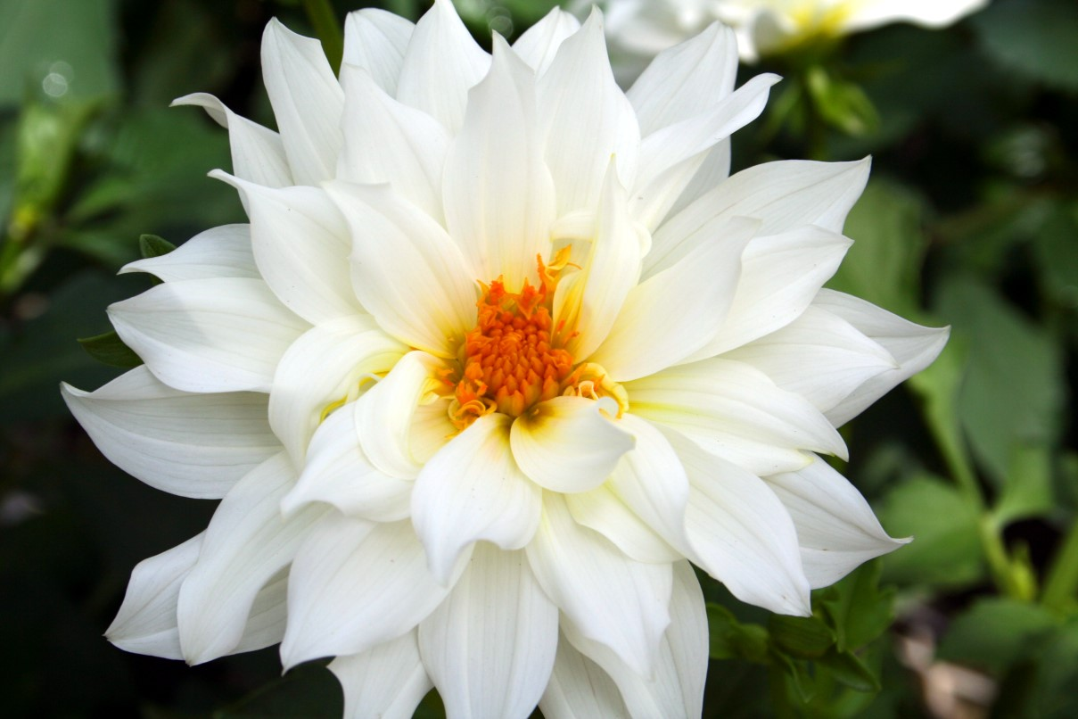 Pretty white flowers 26 background hdflowerwallpaper pretty white flowers free wallpaper mightylinksfo Image collections