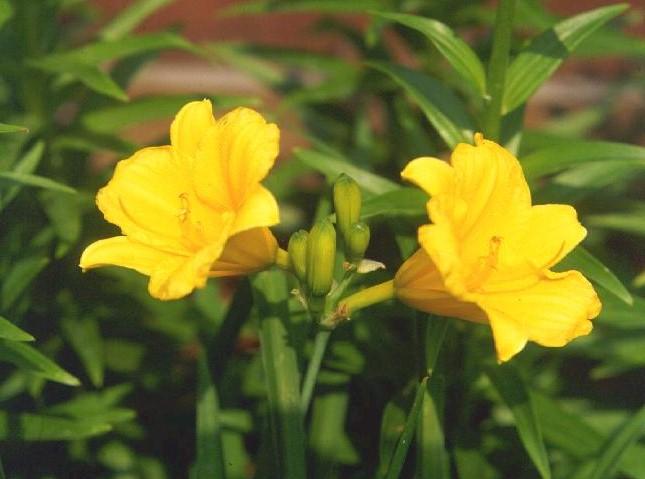 Types fall yellow flowers 22 hd wallpaper hdflowerwallpaper types fall yellow flowers free wallpaper mightylinksfo