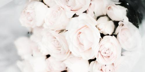 White flowers tumblr 1 widescreen wallpaper hdflowerwallpaper white flowers tumblr background mightylinksfo