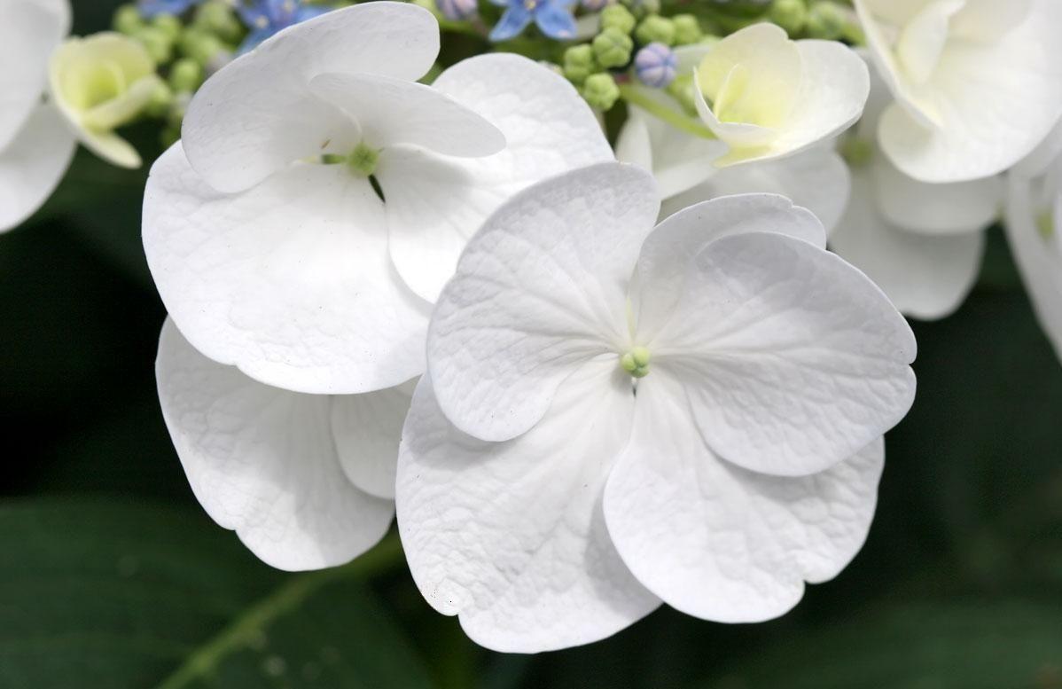 White Flowers Types 9 Background Wallpaper Hdflowerwallpaper