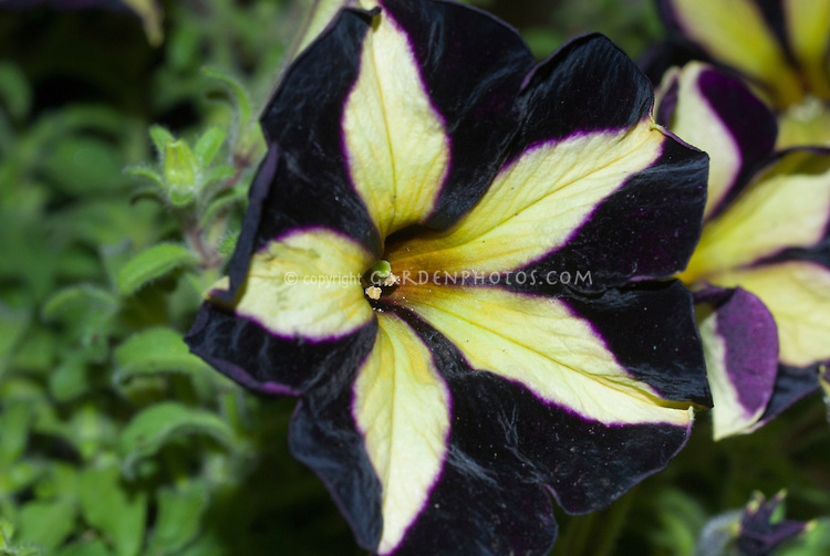 Yellow flower black center images flower decoration ideas yellow flowers black center 16 cool hd wallpaper hdflowerwallpaper yellow flowers black center free wallpaper mightylinksfo mightylinksfo