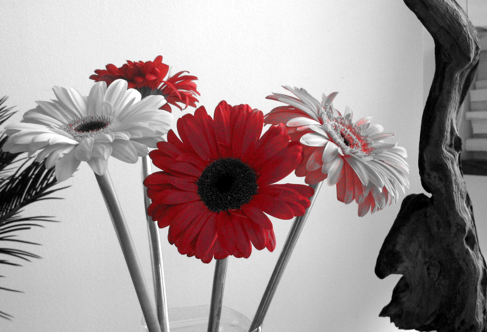 Black and white flowers wallpaper 9 cool wallpaper black and white flowers wallpaper wide wallpaper mightylinksfo