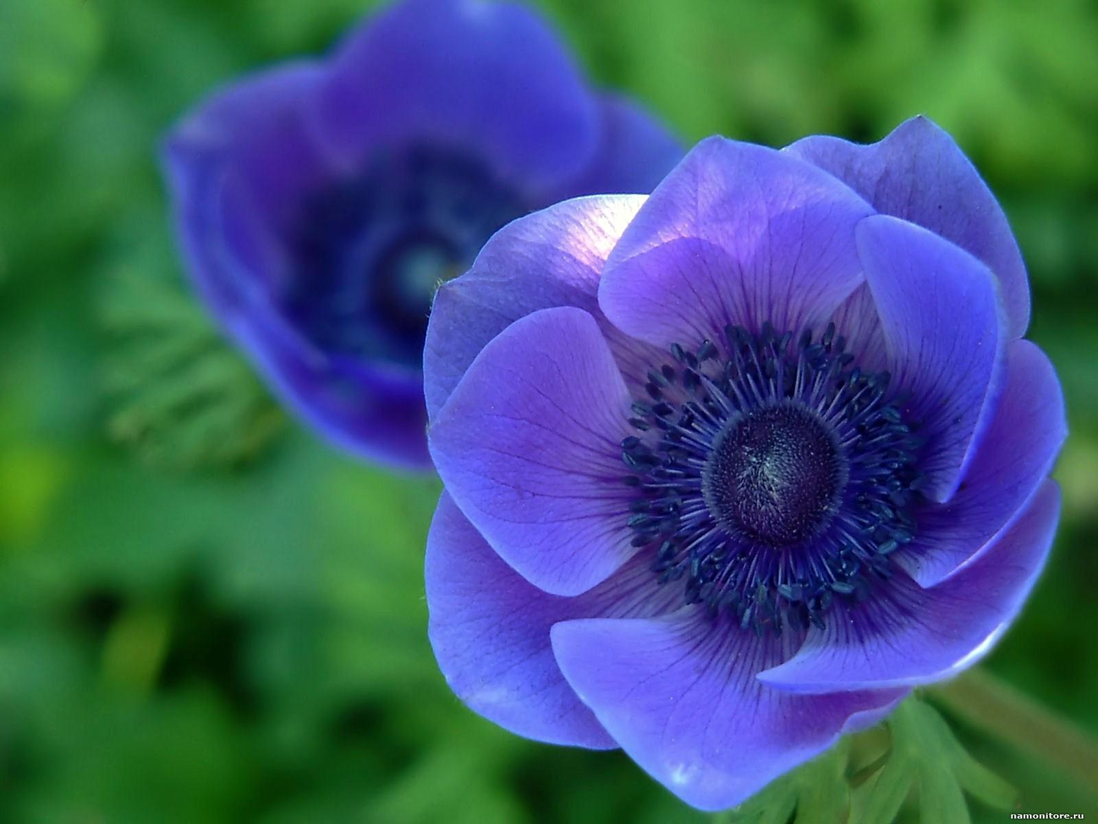 Purple blue flowers yelomphonecompany purple blue flowers izmirmasajfo