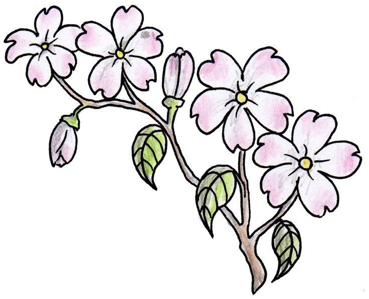 Pink flowers drawing 26 cool wallpaper hdflowerwallpaper pink flowers drawing hd wallpaper mightylinksfo