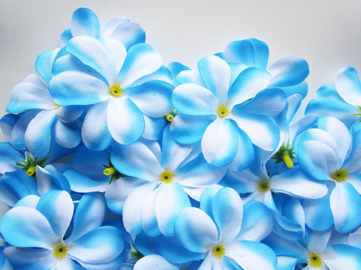 Blue flowers hd wallpapers 30 cool hd wallpaper hdflowerwallpaper blue flowers hd wallpapers 30 cool hd wallpaper izmirmasajfo