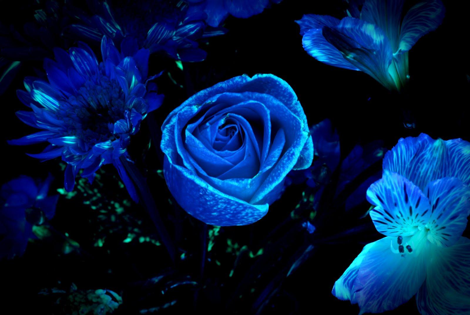 dark blue flowers background wwwpixsharkcom images