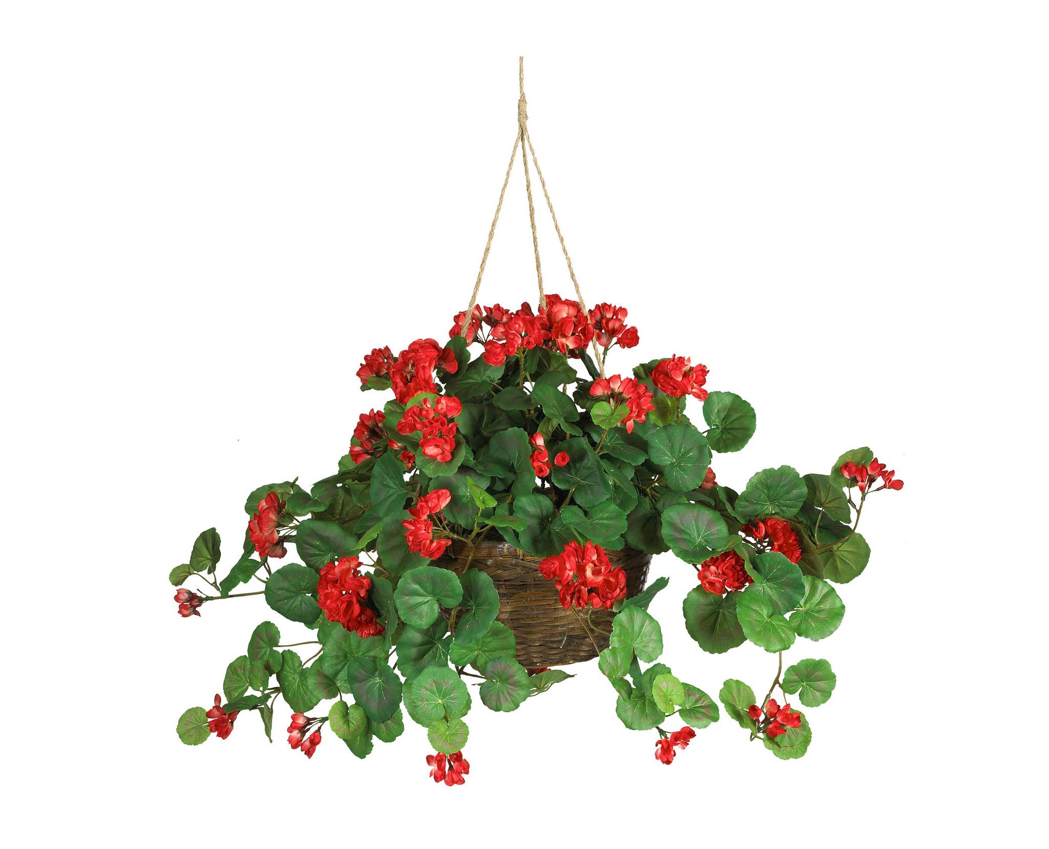 Red Flowers For Hanging Baskets 30 Background Wallpaper HdFlowerWallpaper