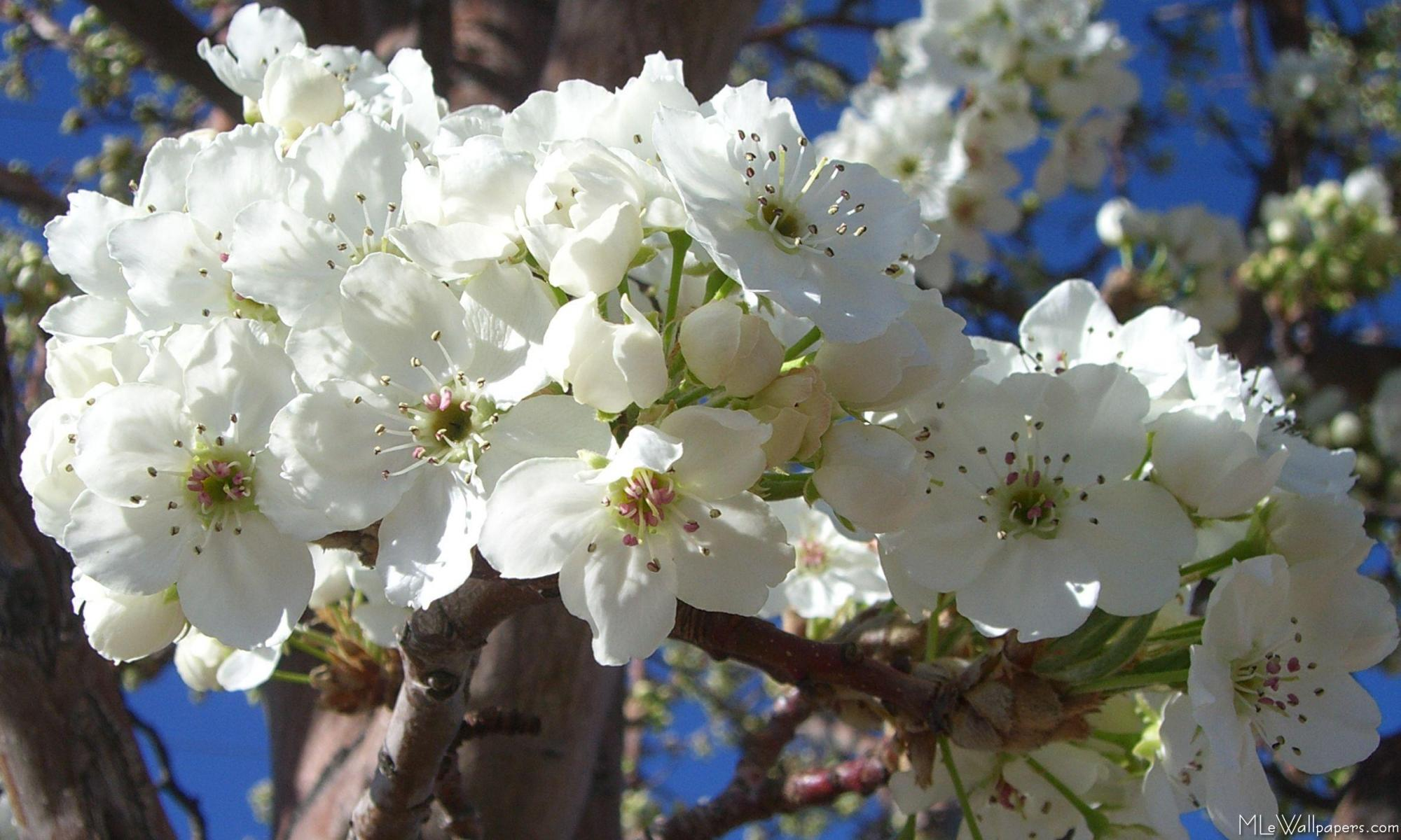 Magnificent White Flowers Names And Pictures Picture Collection
