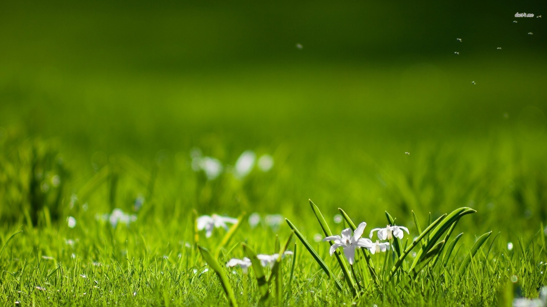 White flowers in grass 9 cool wallpaper hdflowerwallpaper white flowers in grass free wallpaper mightylinksfo Choice Image