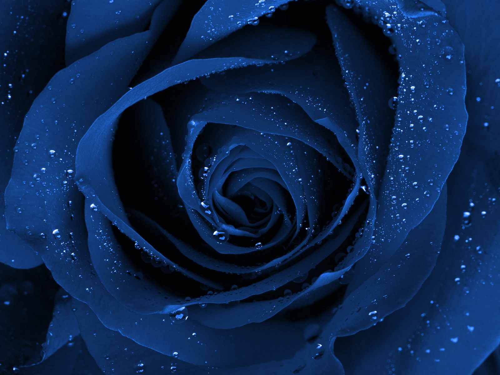 Beautiful Flowers Wallpaper Blue On Blue 2 Cool Hd Wallpaper