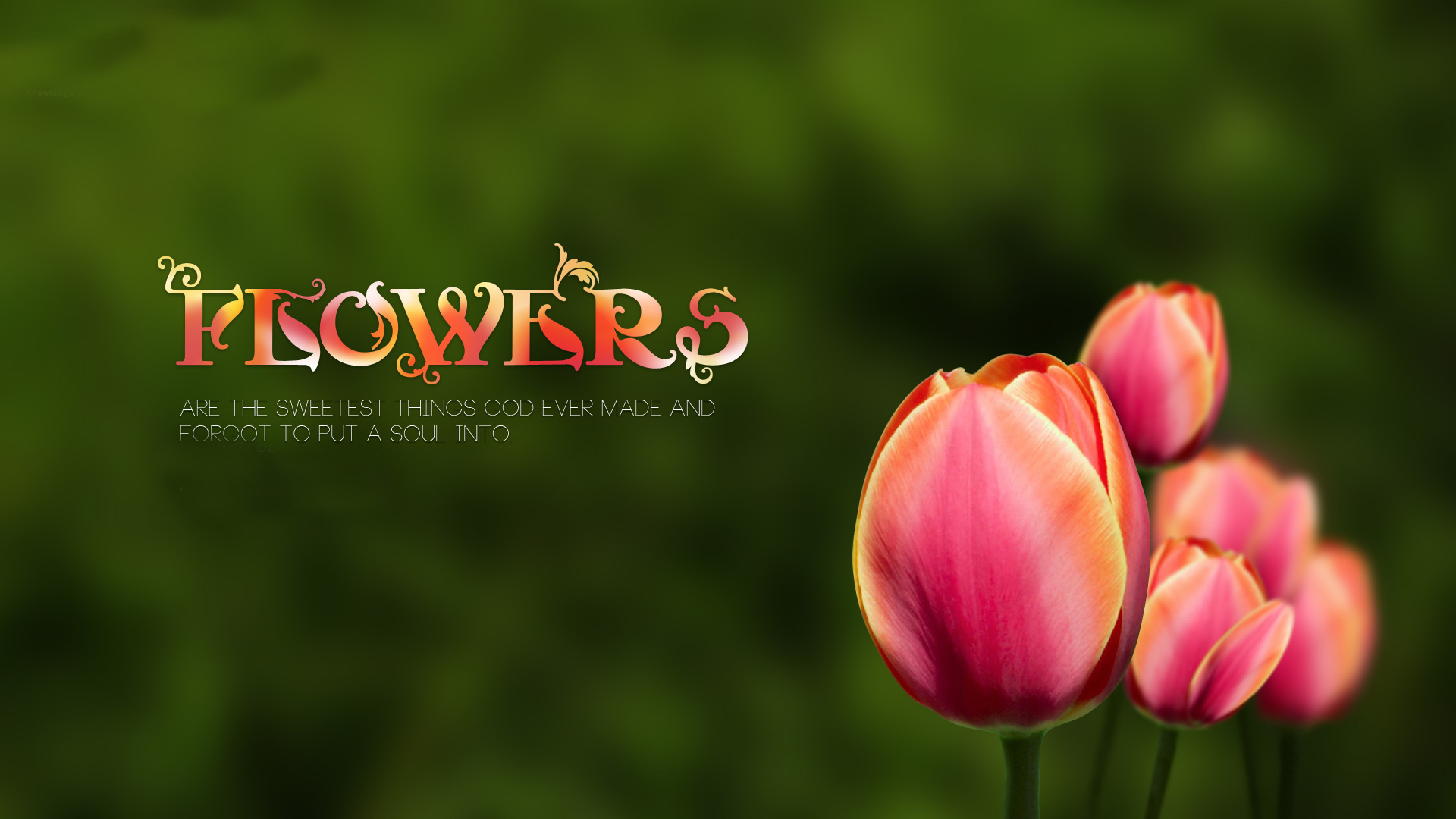 Superb Flower Wallpaper Quotes 22 Background Awesome Design