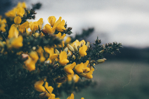 yellow flowers tumblr 11 free hd wallpaper
