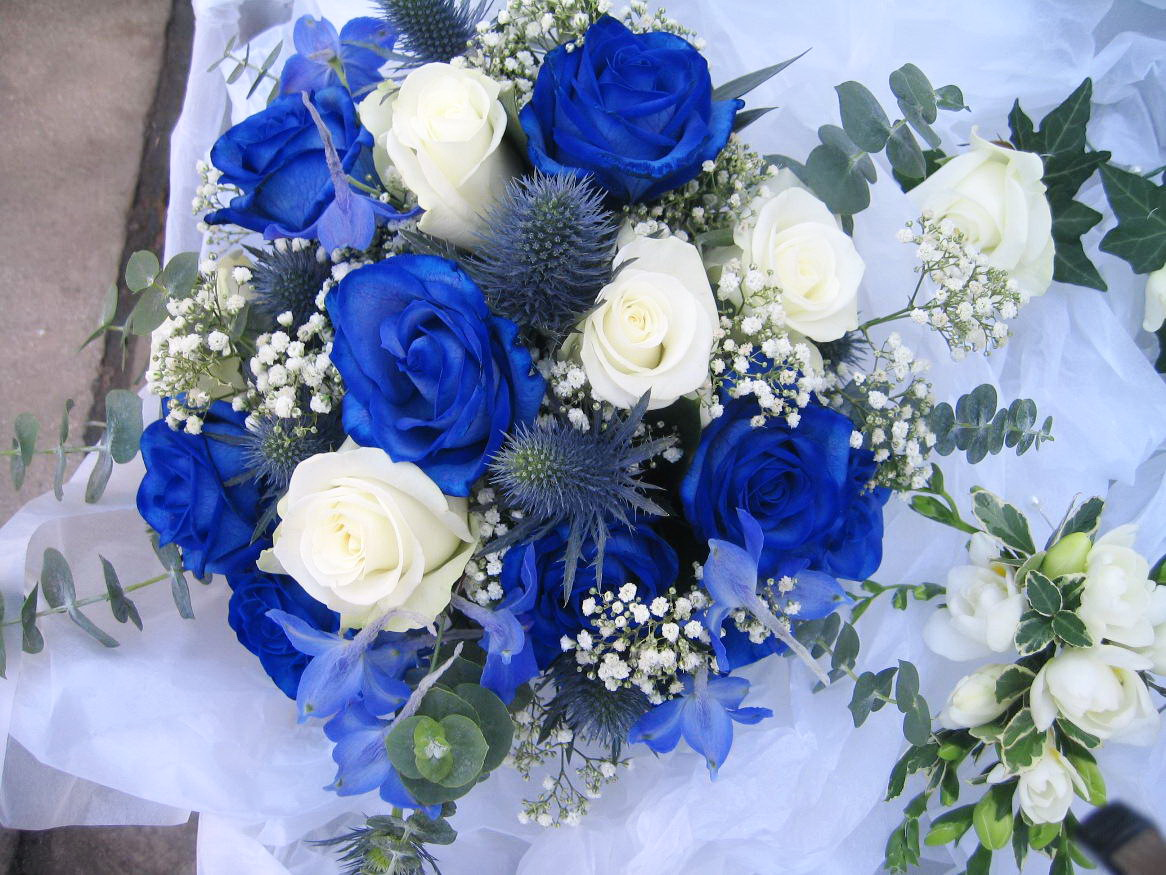 Blue And White Flower Wallpaper: Blue And White Rose Wallpaper 3 High Resolution Wallpaper