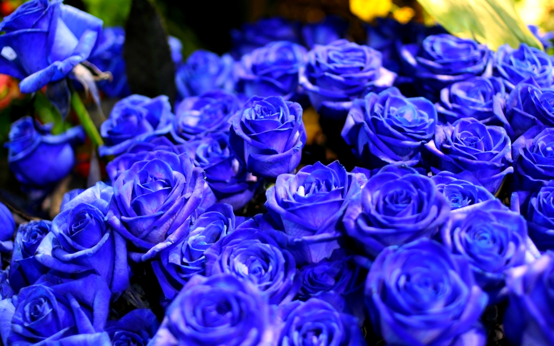 blue rose wallpaper for desktop 22 widescreen wallpaper