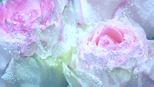 Free pink rose with raindrops wallpaper 15 background free pink rose with raindrops wallpaper hd wallpaper altavistaventures Image collections