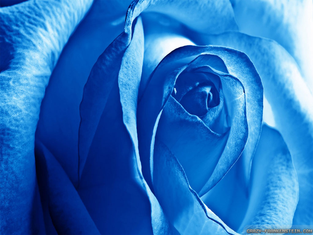 Light Blue Roses Wallpaper 9 Cool Hd Wallpaper ...