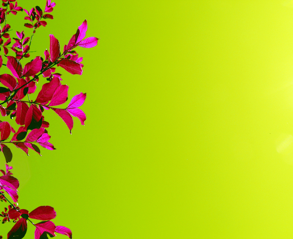Pink And Green Flower Wallpaper 4 Cool Wallpaper Hdflowerwallpaper