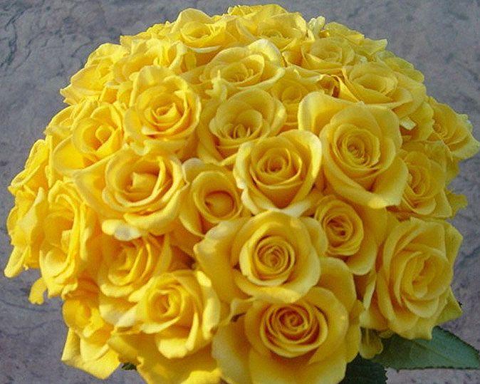 Flower meaning yellow rose 17 wide wallpaper hdflowerwallpaper flower meaning yellow rose hd wallpaper mightylinksfo